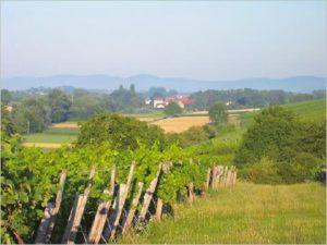 """Typischer Südpfälzer Weitblick. """"Weinstube zum Fuchsbau"""" in Vollmersweiler"""