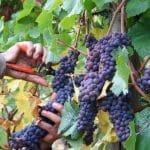 Weingut Raabe ins Sankt Martin