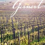 Weinberg des Weingut Gernert in Sankt Martin in der Pfalz