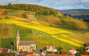 Weingarten in der Pfalz