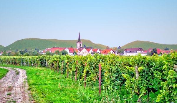 Edesheim in der Pfalz, eingebettet in ein Meer von Reben