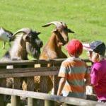 Kinder und Ziegen im Wild- und Wanderpark in Silz