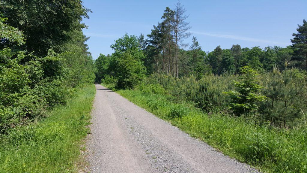Queichtal Radweg in Bellheim in der Pfalz