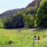 Waldidylle um den Paddelweiher