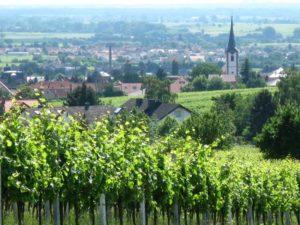 Maikammer in der Pfalz