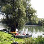 Am Altrhein bei Waldsee in der Pfalz