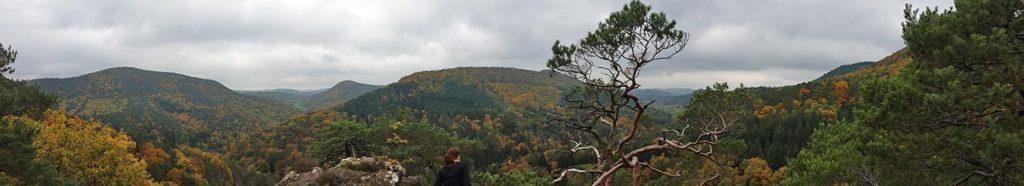Pfälzerwald bei Wernersberg-Spirkelbach