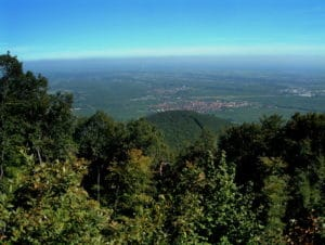 Blick von der großen Kalmit, der höchste Berg des Pfälzerwaldes