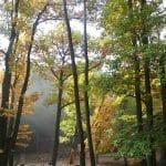 Waldspielplatz an der