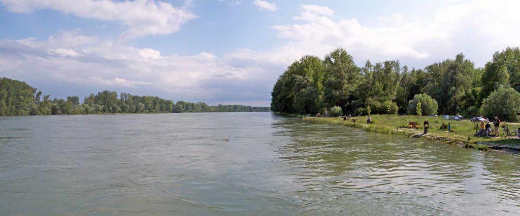 Am Rhein in Leimersheim in der Pfalz