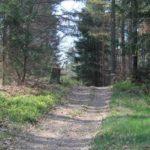 Überzwerchberg im Pfälzerwald
