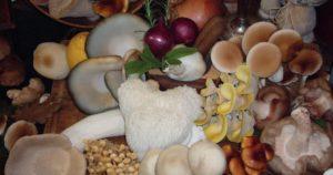 Pilze aus dem Pfälzerwald