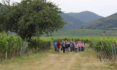 Weingut Glaser in Hainfeld