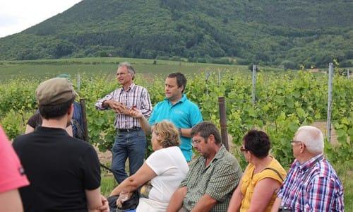 Weinbergswanderung, auch Terroirwanderunen, mit dem Winzer. Hier Weingut Glaser Hainfeld