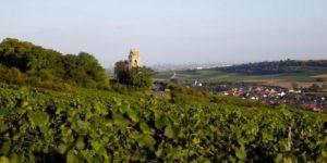 Weinbaugebiet Zellertal, hervorragende Weine