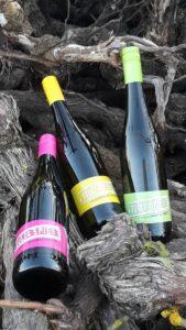 Weine vom Weingut Spies in Neustadt / Duttweiler an der Weinstraße