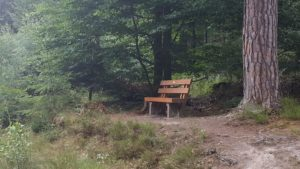 Lauschige Plätzchen im Pfälzerwald