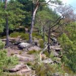 "Premiumwanderweg ""Dahner Felsenpfad"""