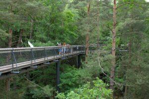Hängebrücke auf dem Baumwipfelpfad in Fischbach bei Dahn