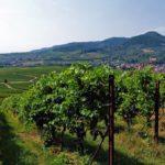 Der phantastische Blick von Albersweiler in der Pfalz aus auf den Ringelsberg