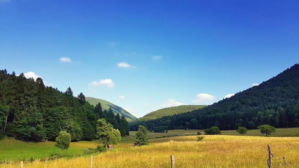 Das Modenbachtal in der Pfalz