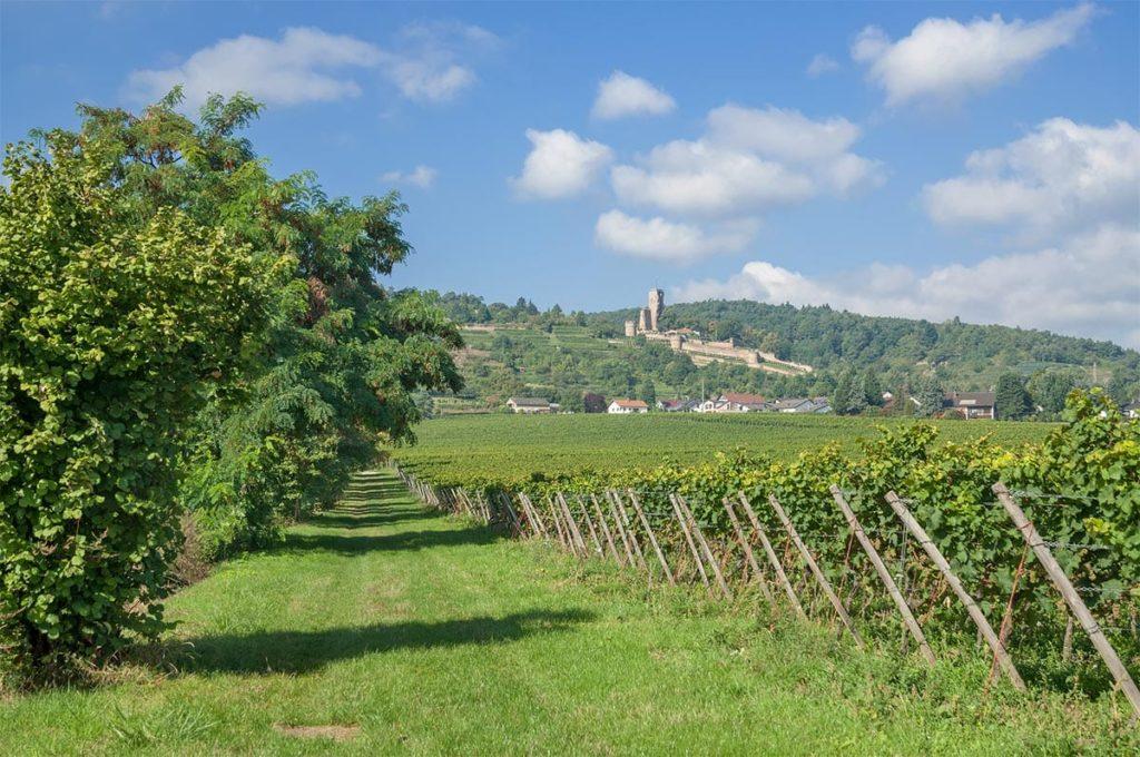 Die Wachtenburg über Wachenheim an der Weinstraße in der Pfalz