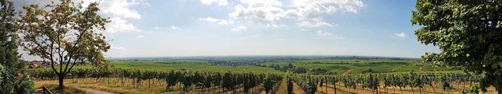 Der Panoramablick über die Rheinebene von der Michaelskapelle in Weyher / Pfalz aus