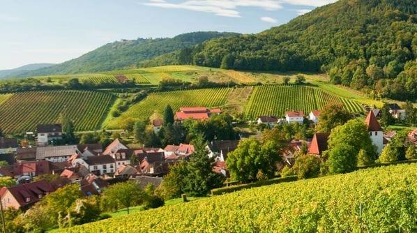 Leinsweiler in der Pfalz, Weinberge