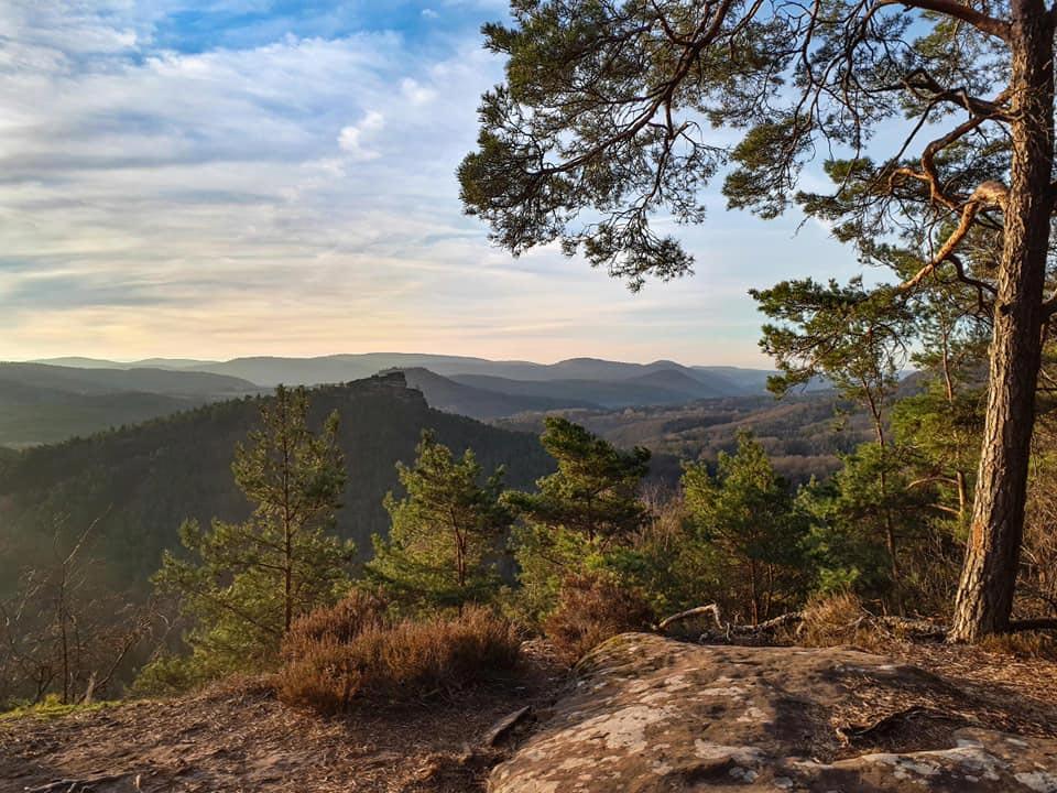 Der Blick vom Kuhfelsen auf dem Rodalber Felsenwanderweg