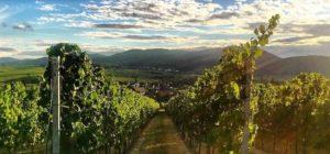 Göcklingen in der Pfalz