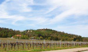 Battenberg in der Pfalz