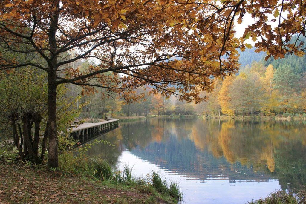 Der Helmbachweiher im Herbst