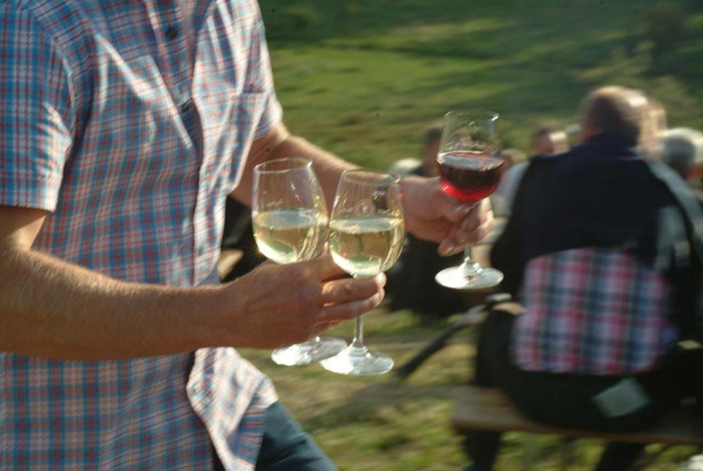 Kulinarische Weinbergswanderung Siebeldingen