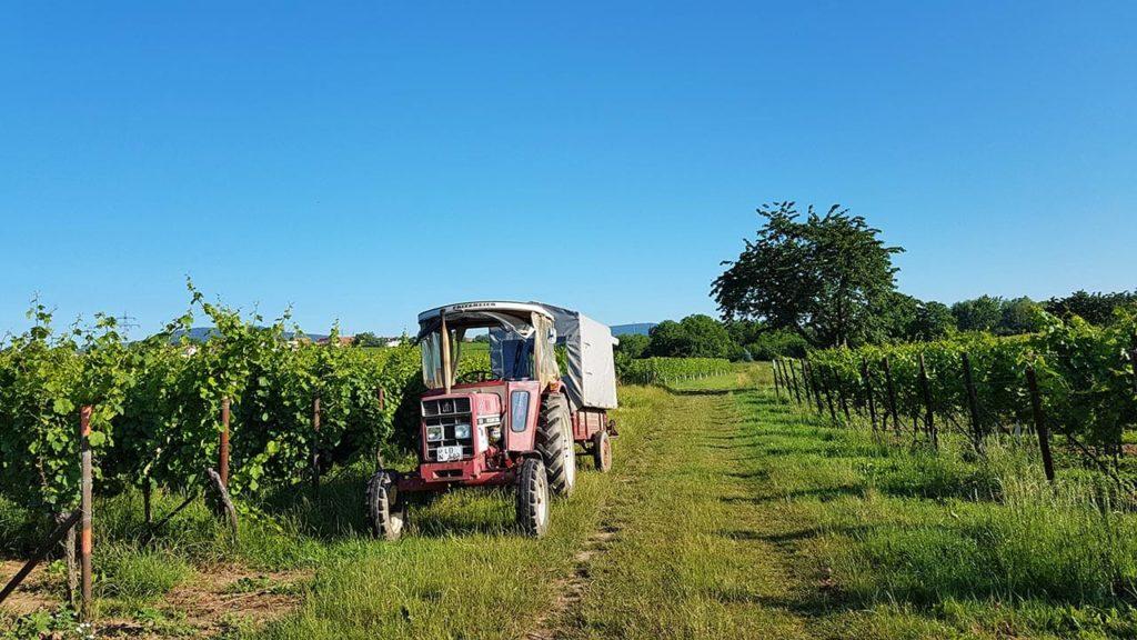 Pfalz Weinbau