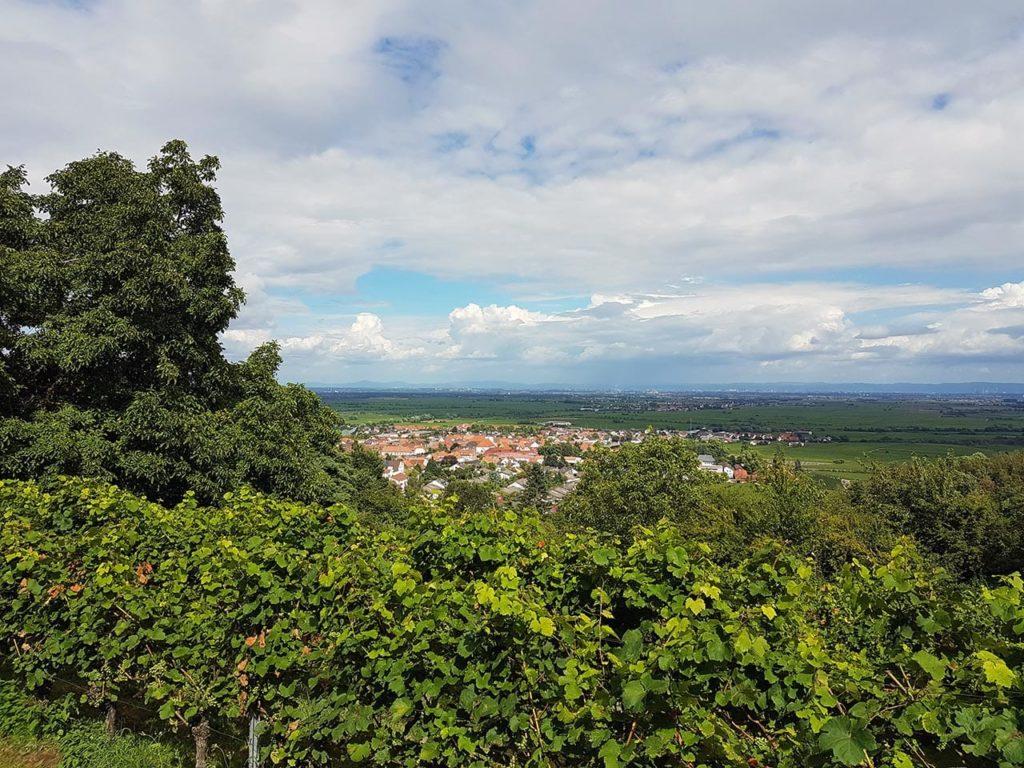 Wachenheim an der Weinstraße in der Pfalz