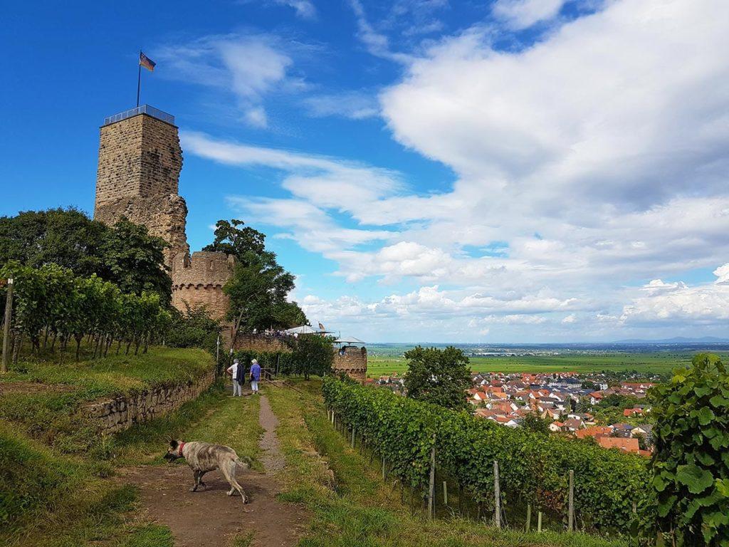 Die Wachtenburg über Wachenheim